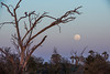 Moonrise over the Okavango
