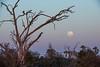 Moonrise over the Okavango