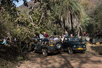 Safari vehicles surrounding a sleeping tiger